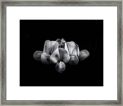 Backyard Flowers In Black And White 5 Framed Print by Brian Carson