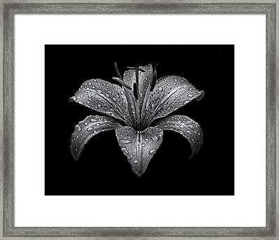 Backyard Flowers In Black And White 8 After The Storm Framed Print