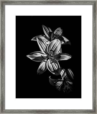 Backyard Flowers In Black And White 9 Framed Print by Brian Carson