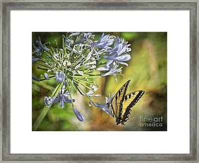 Backyard Nature Framed Print by Peggy Hughes