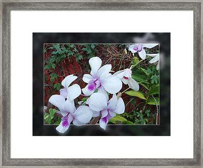 Framed Print featuring the photograph Backyard Orchid Two by Ginny Schmidt