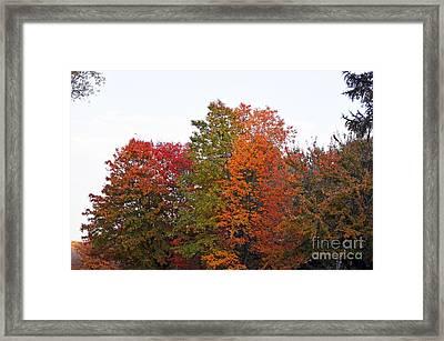 Backyard Trees Framed Print by Judy Wolinsky