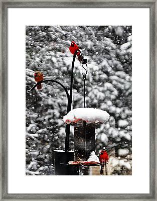 Backyard Winter Wonderland 2  Framed Print by Lydia Holly