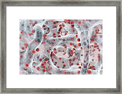 Bacteria In A Biofilm Framed Print by Kateryna Kon