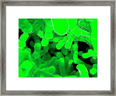 Bacteria Framed Print by Juan Gaertner