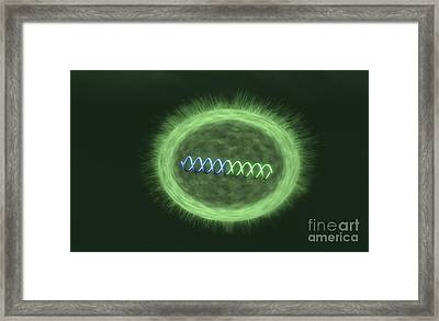 Bacteria With Integrated Foreign Framed Print by Equinox Graphics