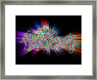 Bacterial Biofilm Enzyme Framed Print by Laguna Design