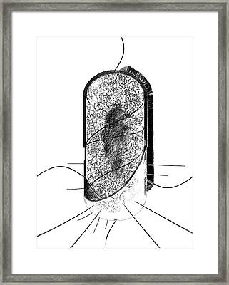 Bacterial Cell Framed Print
