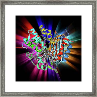 Bacterial Cell Wall Enzyme Molecule Framed Print