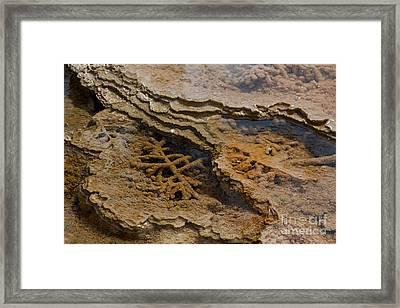 Bacterial Mat 8 Framed Print by Dan Hartford