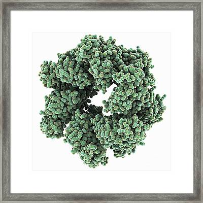 Bacterial Twitching Motility Protein Framed Print