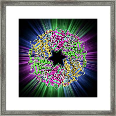 Bacteriophage Atpase Molecule Framed Print by Laguna Design