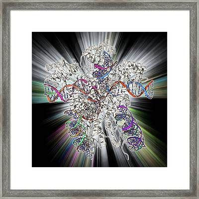 Bacteriophage Dna Recombination Framed Print by Laguna Design