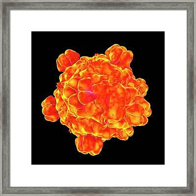 Bacteriophage Omega Framed Print by Mehau Kulyk