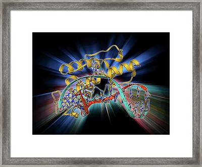Bacteriophage Restriction Enzyme Framed Print by Laguna Design