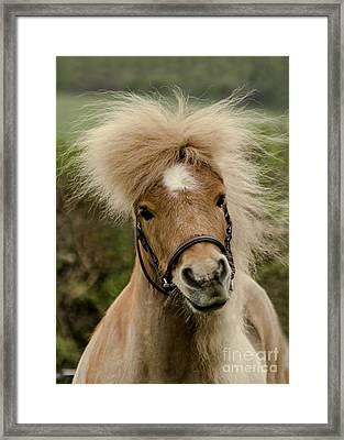 Bad Hair Day 2 Framed Print by Linsey Williams