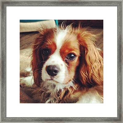 Bad Hair Day For Puppy Framed Print