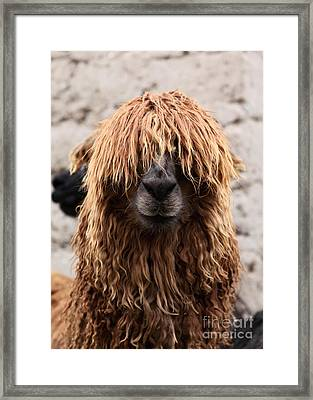 Bad Hair Day Framed Print by James Brunker