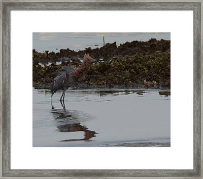 Bad Hair Day Framed Print by Julie Cameron