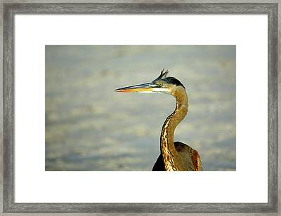 Bad Hair Day Framed Print