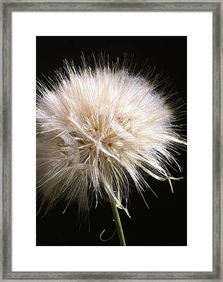 Bad Hair Day Framed Print by Stephanie Aarons
