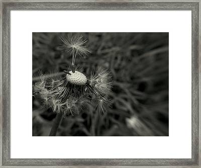 Framed Print featuring the photograph Bad Hair Day by Suzy Piatt