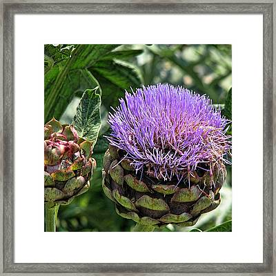 Bad Hair Day Framed Print by Wendy J St Christopher