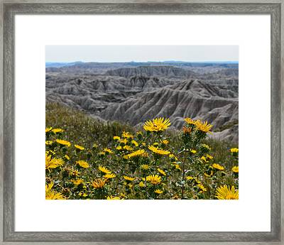Badlands Flowers Framed Print by Robin Williams