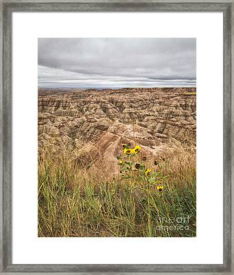Framed Print featuring the photograph Badlands Wild Sunflowers by Sophie Doell