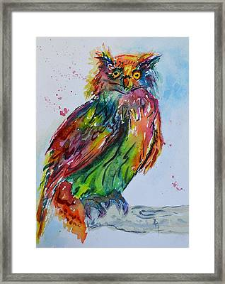 Baffled Owl Framed Print