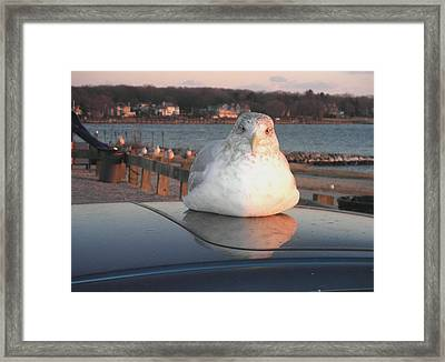 Bagel Or Seagull Framed Print by Kate Gallagher