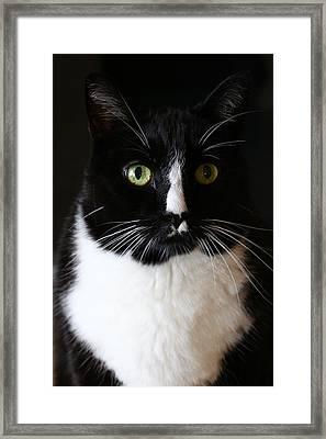 Bailey Framed Print by Blake Tumbleson