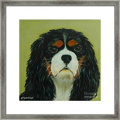 Framed Print featuring the painting Cavalier King Charles Spaniel by Shelia Kempf