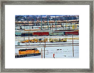 Bailey's Colors Framed Print by Sylvia Thornton