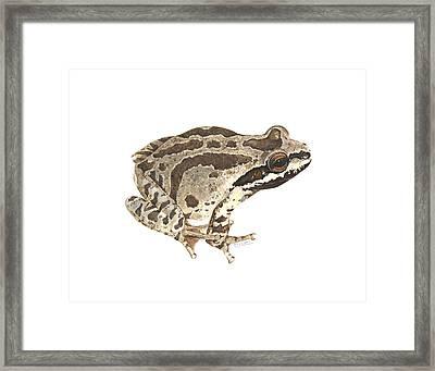 Baja California Treefrog Framed Print by Cindy Hitchcock