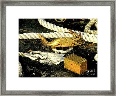Baked Crab Framed Print by Joe Jake Pratt