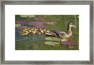 Bakers Dozen Framed Print by Mary Zeman