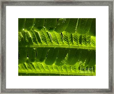 Framed Print featuring the photograph Balance by Agnieszka Ledwon