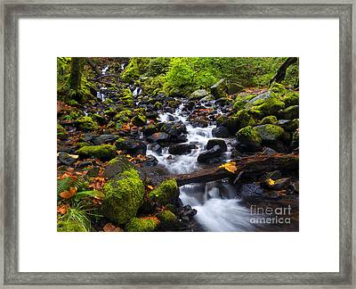 Balance  Of Autumn Framed Print