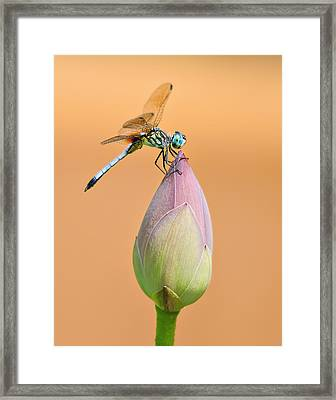 Balance Of Nature Framed Print