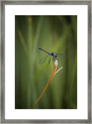 Balancing Act Framed Print by Bradley Clay