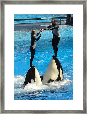 Balancing Act Framed Print by David Nicholls