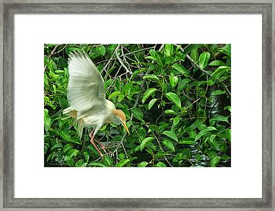 Framed Print featuring the photograph Balancing Act by Dennis Baswell
