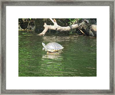 Balancing Act Framed Print by Fortunate Findings Shirley Dickerson