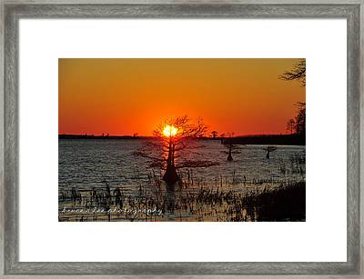 Bald Cypress At Sunset Framed Print by Bruce A Lee