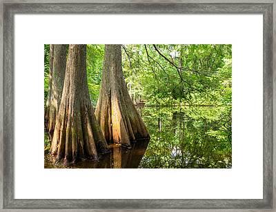 Bald Cypress In Summer Green - Texas Framed Print
