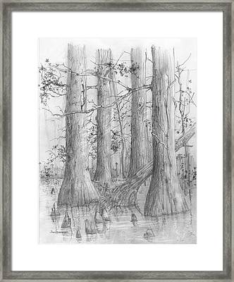 Bald Cypress Framed Print