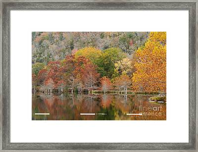 Bald Cypresses And Sycamore - Beaver's Bend State Resort Park - Broken Bow Oklahoma Framed Print