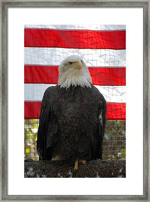 Bald Eagle 265 Framed Print by Joyce StJames