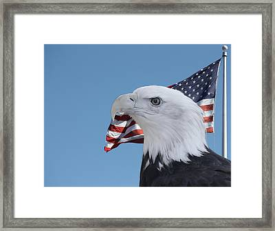 Bald Eagle And Flag Framed Print